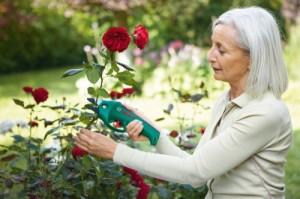 Eine elektrische Astschere erleichtert die Gartenarbeit